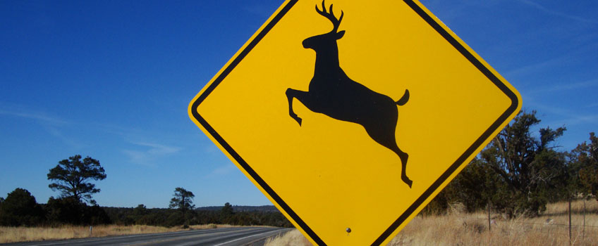 When Deer and Cars Collide, Damage and Injuries are Likely